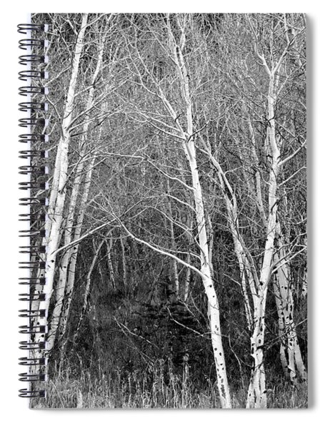 Aspen Forest Black And White Print Spiral Notebook