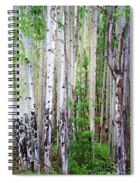 Aspen Grove In The White Mountains Spiral Notebook