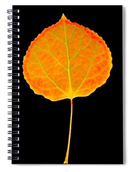Aspen Leaf Glory Spiral Notebook