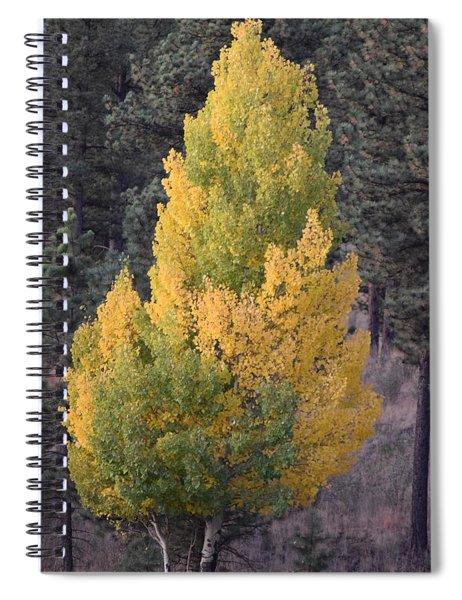 Aspen Tree Fall Colors Co Spiral Notebook