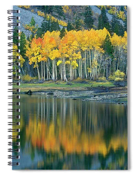 Aspens In Fall Color Along Lundy Lake Eastern Sierras California Spiral Notebook