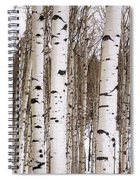 Aspens In Winter Panorama - Colorado Spiral Notebook