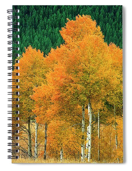Aspens Populus Tremuloides Fall Color Grand Tetons National Park Wyoming Spiral Notebook