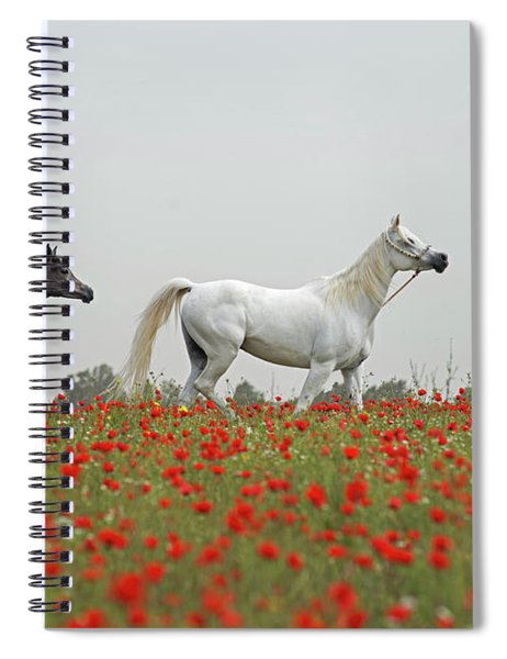 At The Poppies' Field... Spiral Notebook
