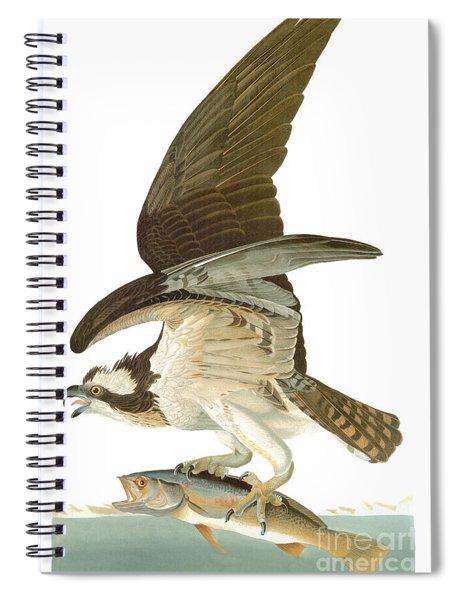 Audubon: Osprey Spiral Notebook