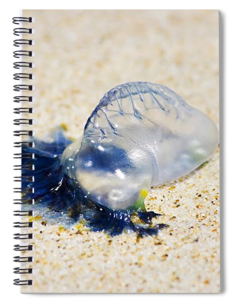 Australian Blue Bottle Jellyfish Spiral Notebook