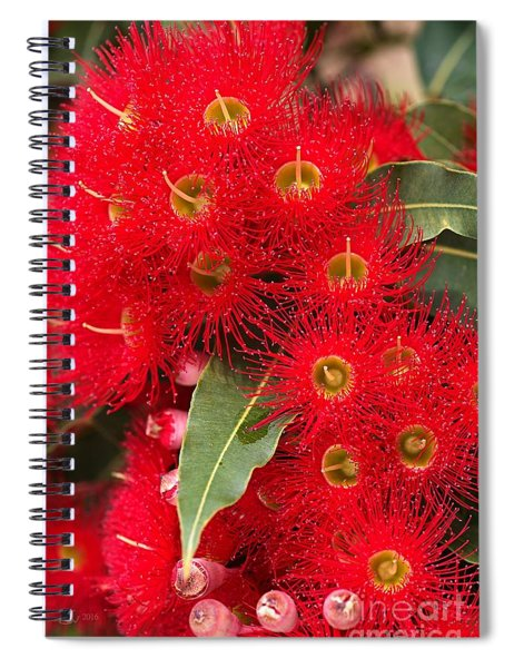 Australian Red Eucalyptus Flowers Spiral Notebook