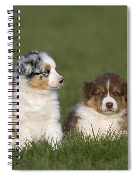 Australian Shepherd Puppies Spiral Notebook