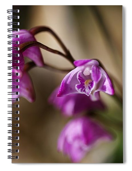 Australia's Native Orchid Small Dendrobium Spiral Notebook