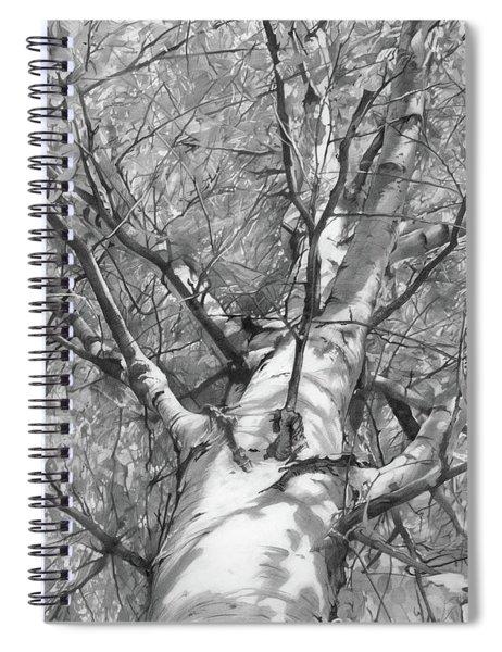 Autumn Birch Spiral Notebook