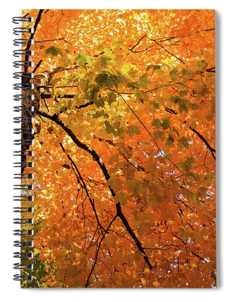 Autumn Canopy In Maine Spiral Notebook