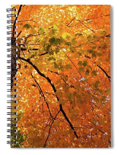 Autumn Canopy In Maine Spiral Notebook