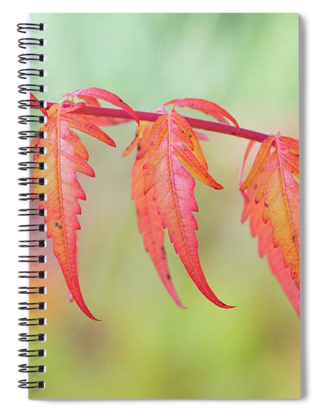 Autumnal Sumac Red Autumn Lace Leaves Spiral Notebook