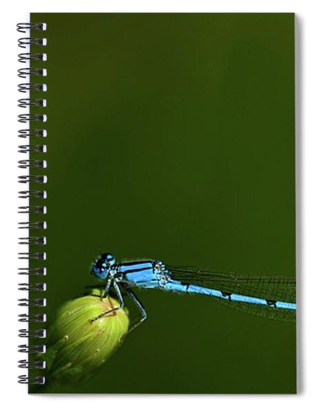 Azure Damselfly-coenagrion Puella Spiral Notebook