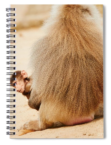 Baboon With A Baby  Spiral Notebook