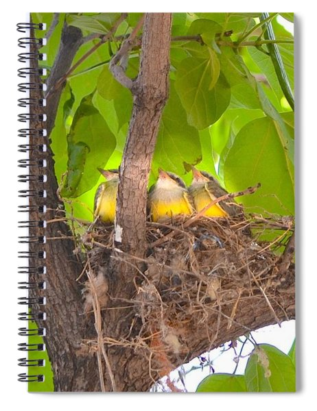 Baby Birds Waiting For Mom Spiral Notebook