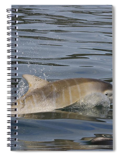 Baby Bottlenose Dolphin - Scotland  #35 Spiral Notebook