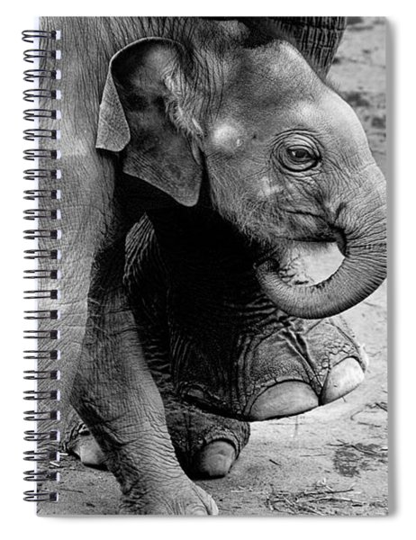 Baby Elephant Security Spiral Notebook