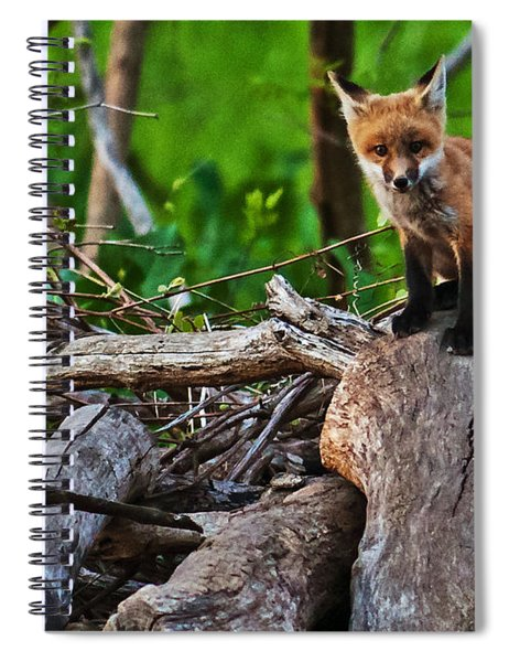 Spiral Notebook featuring the photograph Baby Fox by Edward Peterson