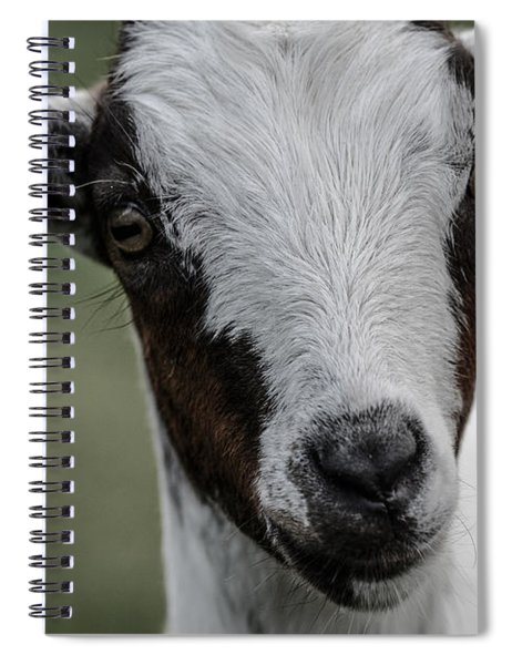 Baby Goat Spiral Notebook