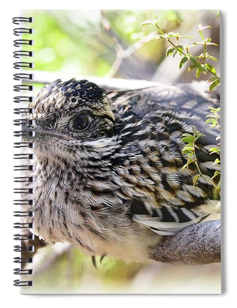 Baby Roadrunner  Spiral Notebook
