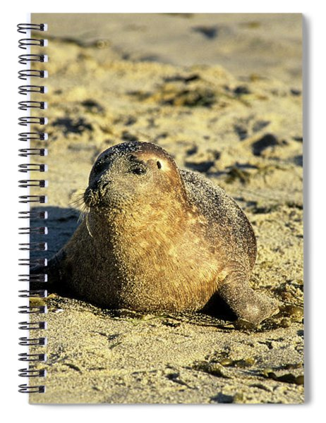 Baby Seal In Sand Spiral Notebook