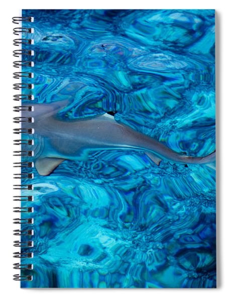 Baby Shark In The Turquoise Water. Production By Nature Spiral Notebook