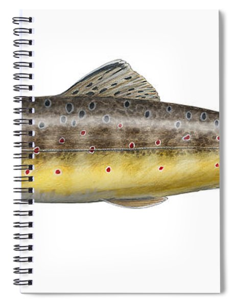 Bachforelle - Indigene - Autochthone- Beekforel - Oering - Truite De Riviere - Trucha Comun Spiral Notebook