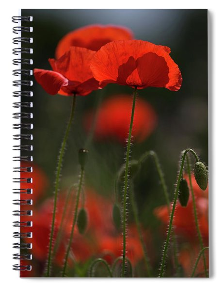 Backlit Poppies Spiral Notebook
