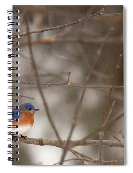 Backyard Blue Spiral Notebook