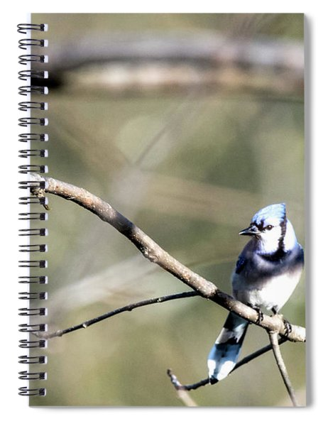 Backyard Blue Jay Spiral Notebook