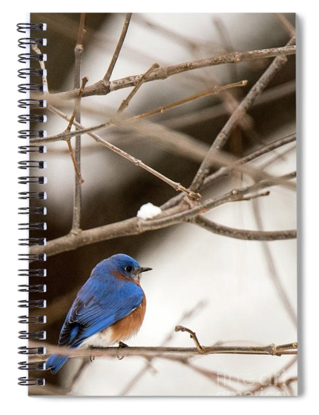 Backyard Bluebird Spiral Notebook