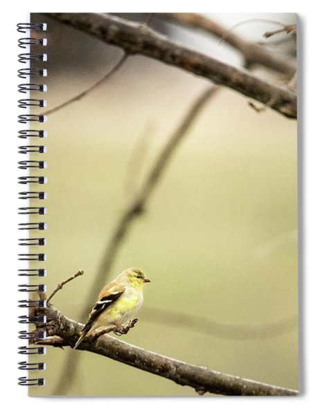 Backyard Yellow Spiral Notebook