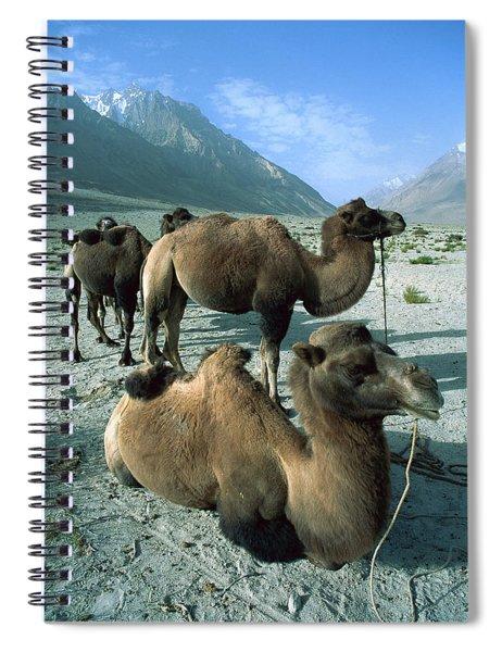 Bactrian Camel Camelus Bactrianus Group Spiral Notebook
