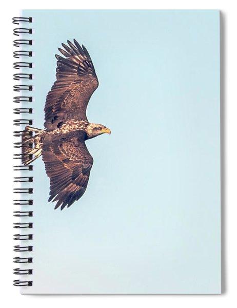 Bald Eagle 0834-121217-1cr Spiral Notebook
