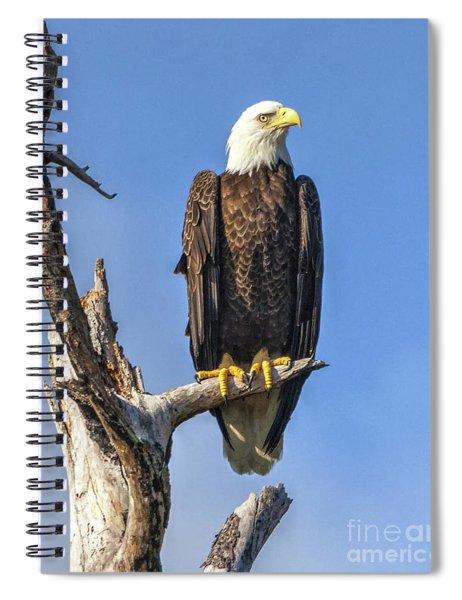 Bald Eagle 6366 Spiral Notebook