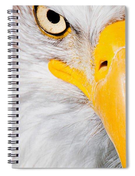 Bald Eagle In Focus Spiral Notebook