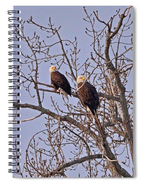Bald Eagle Pair Spiral Notebook