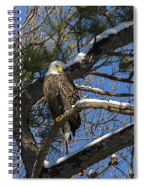 Bald Eagle Watching Her Domain Spiral Notebook