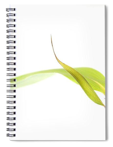 Bamboo Meditation 1 Spiral Notebook