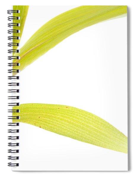 Bamboo Meditation 2 Spiral Notebook