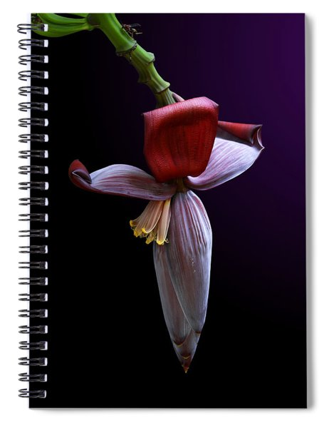 Banana Flower Portrait Spiral Notebook