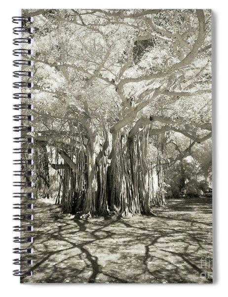 Banyan Strangler Fig Tree Spiral Notebook