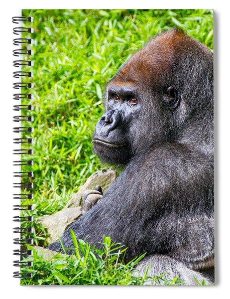 Baraka - Western Lowalnd Silverback Gorilla Spiral Notebook