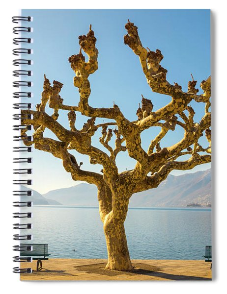 Bare Tree Spiral Notebook