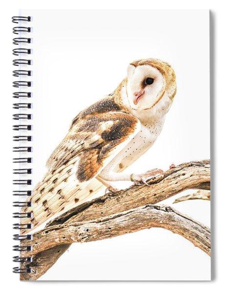 Barn Owl In The Desert Spiral Notebook