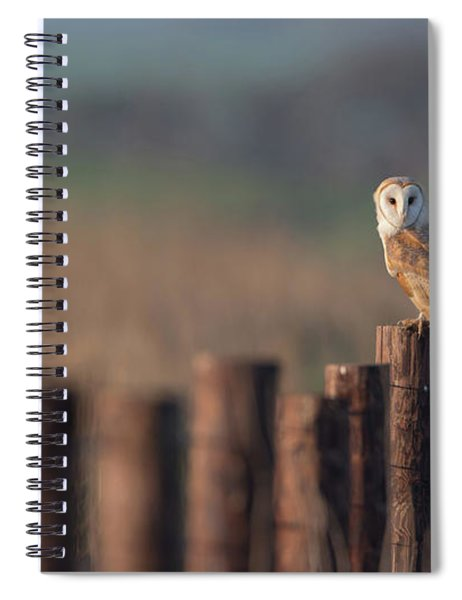 Barn Owl On Fence Line Spiral Notebook