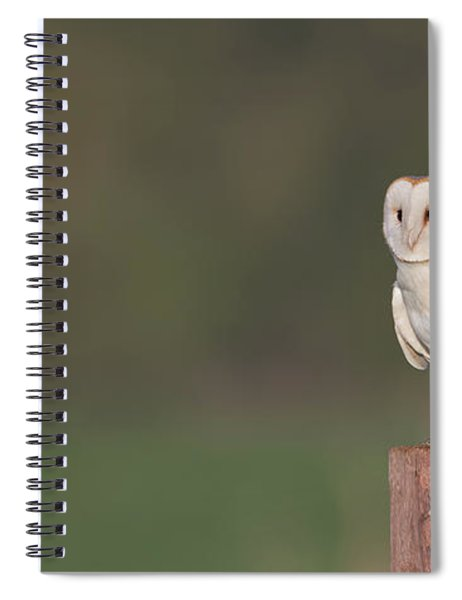 Barn Owl On Post Spiral Notebook