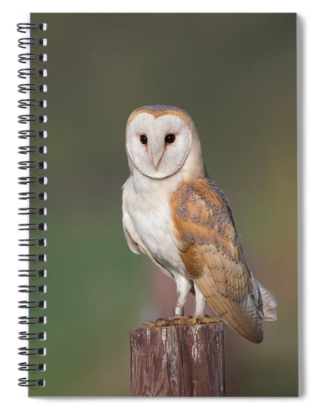 Barn Owl Perched Spiral Notebook