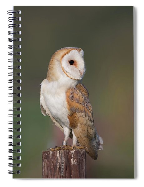 Barn Owl Side On Spiral Notebook